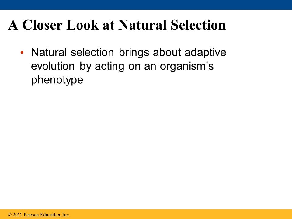 A Closer Look at Natural Selection