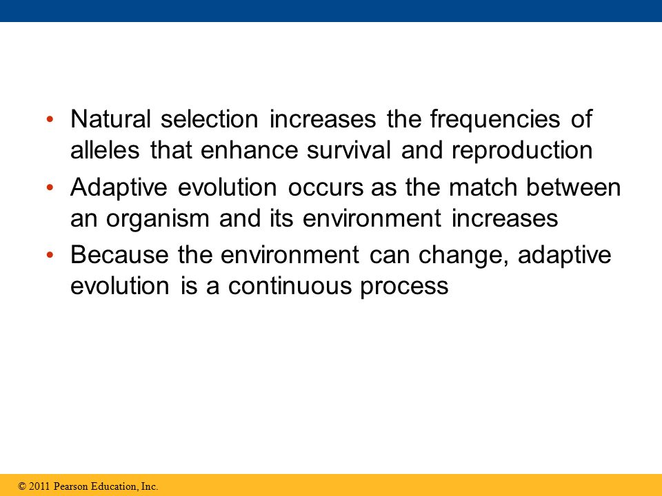 Natural selection increases the frequencies of alleles that enhance survival and reproduction