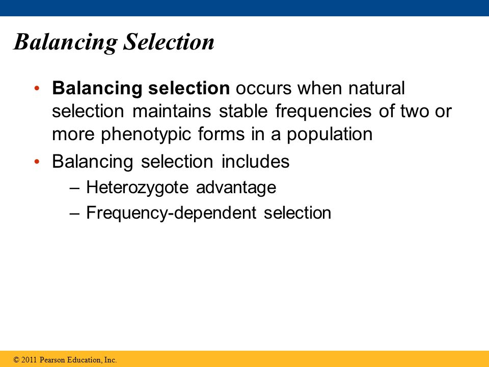 Balancing Selection Balancing selection occurs when natural selection maintains stable frequencies of two or more phenotypic forms in a population.