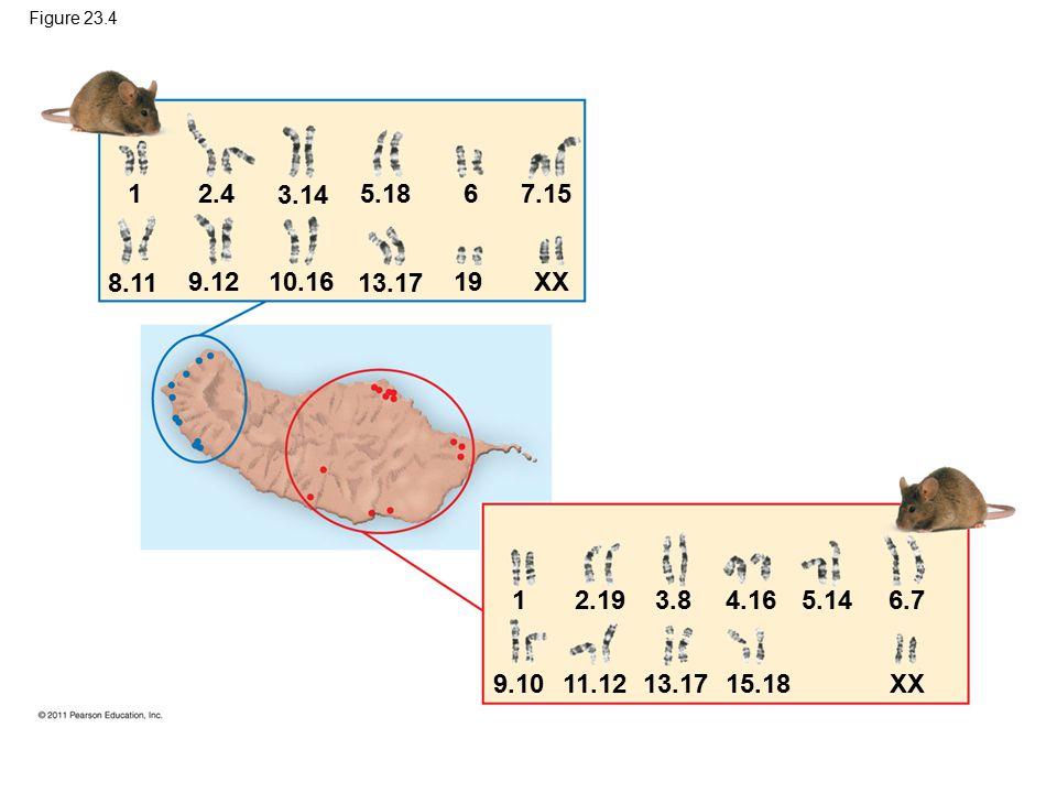 Figure 23.4 1. 2.4. 3.14. 5.18. 6. 7.15. 8.11. 9.12. 10.16. 13.17. 19. XX.