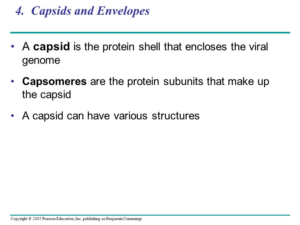 4. Capsids and Envelopes A capsid is the protein shell that encloses the viral genome. Capsomeres are the protein subunits that make up the capsid.