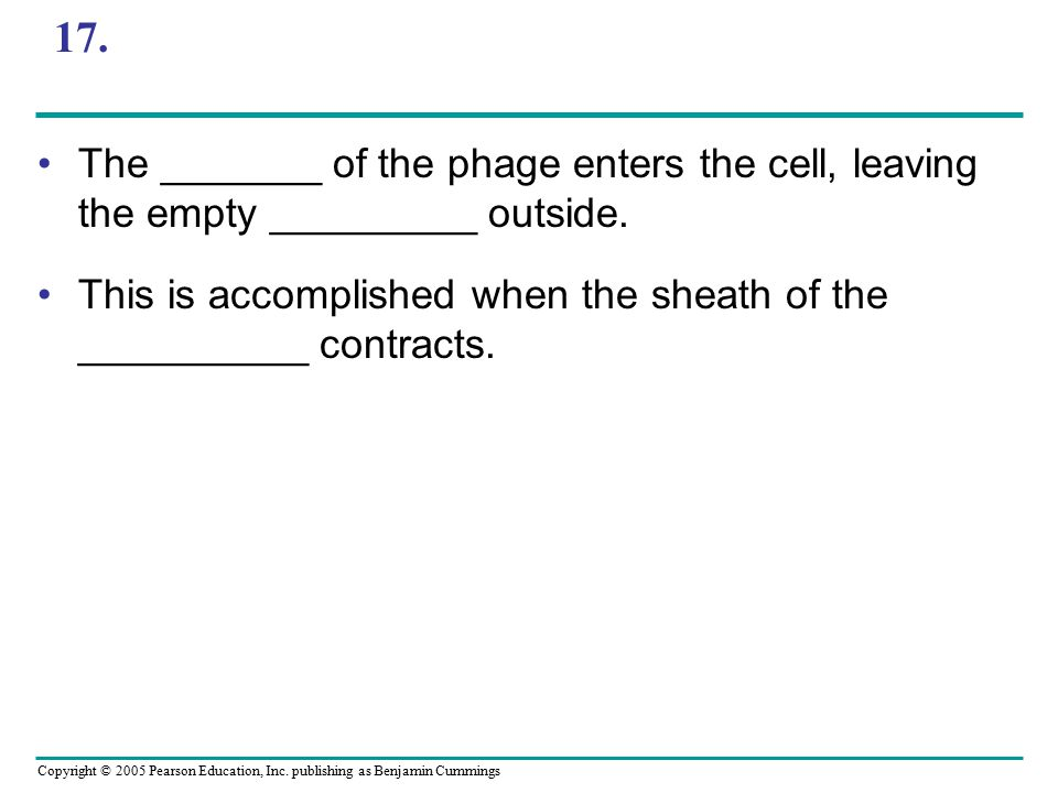 17. The _______ of the phage enters the cell, leaving the empty _________ outside.
