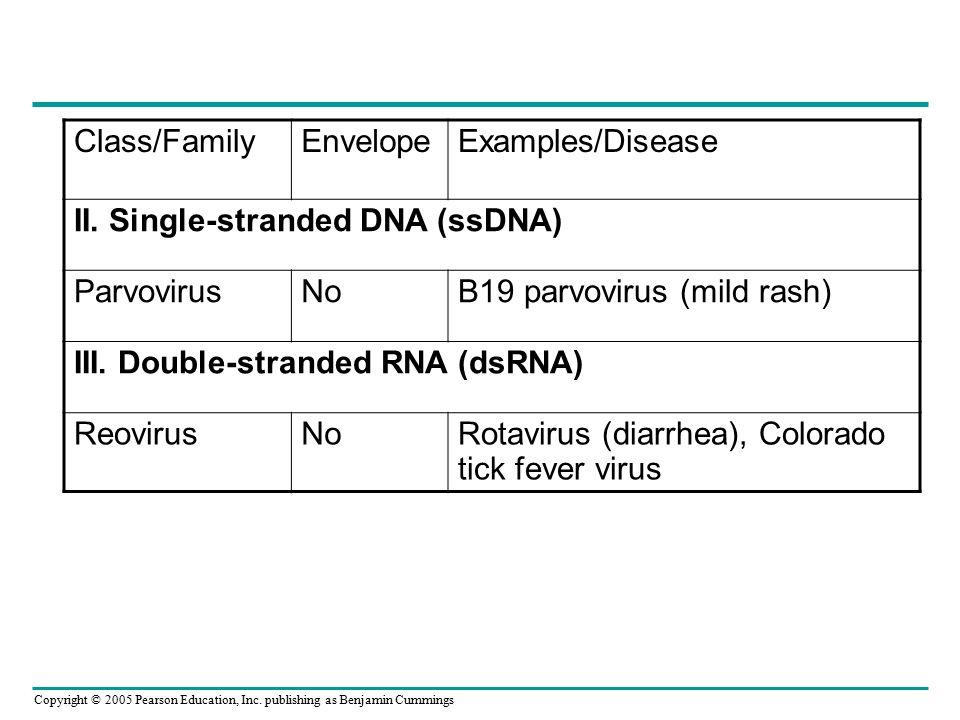II. Single-stranded DNA (ssDNA) Parvovirus No