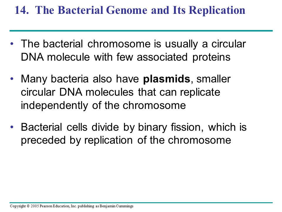 14. The Bacterial Genome and Its Replication