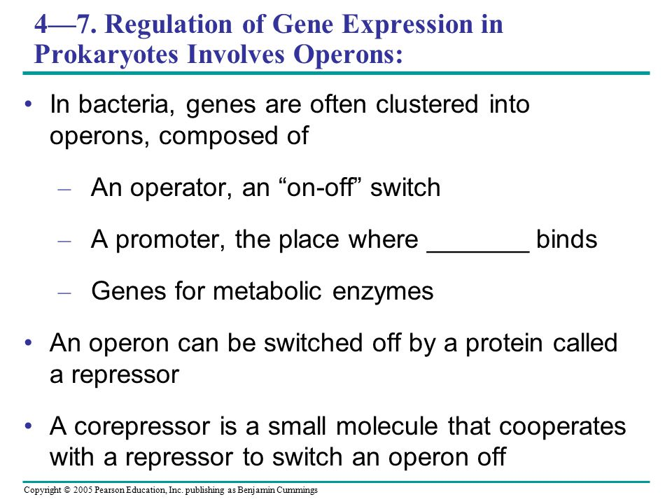 4—7. Regulation of Gene Expression in Prokaryotes Involves Operons: