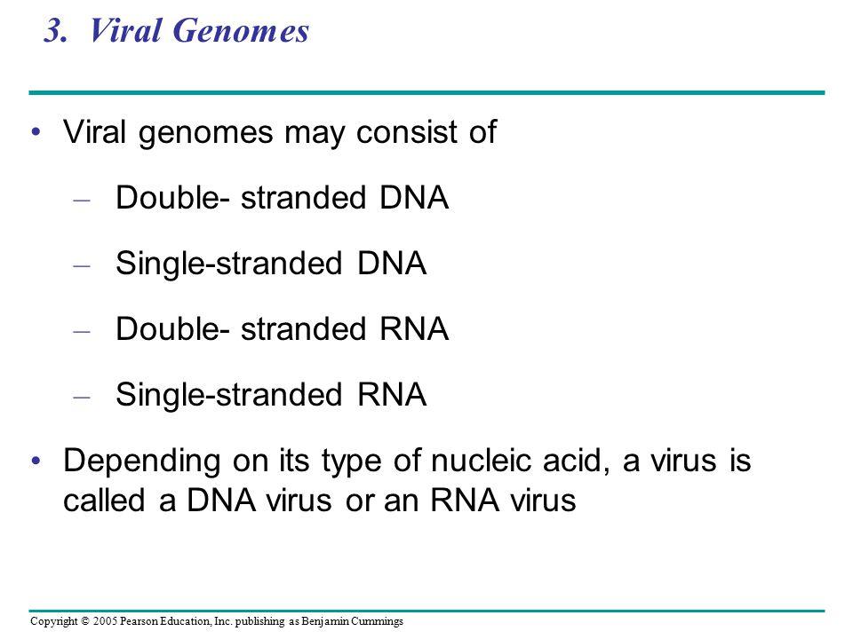 3. Viral Genomes Viral genomes may consist of Double- stranded DNA
