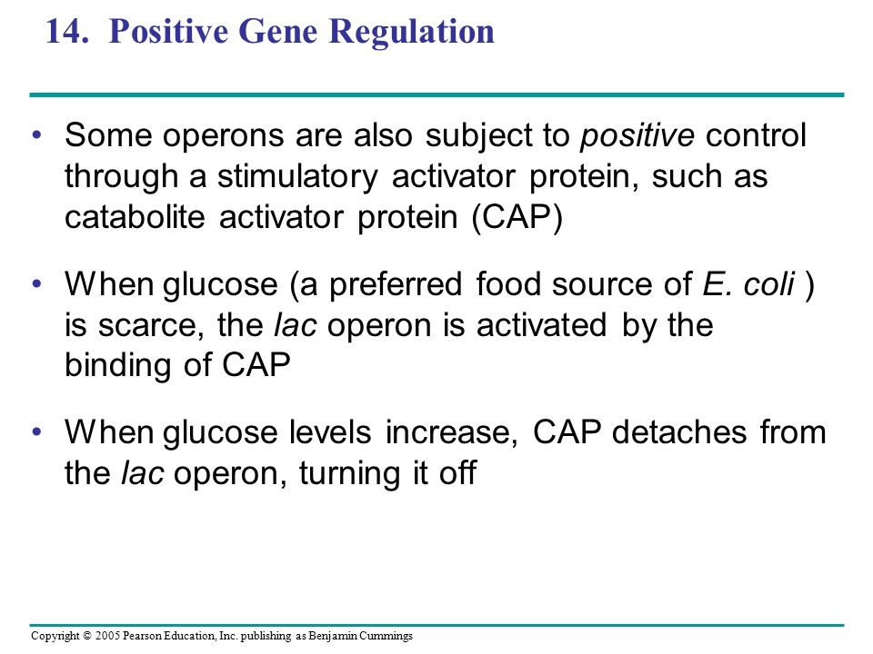 14. Positive Gene Regulation