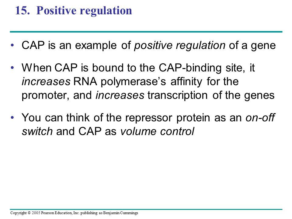 15. Positive regulation CAP is an example of positive regulation of a gene.