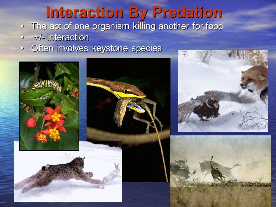 Interaction By Predation