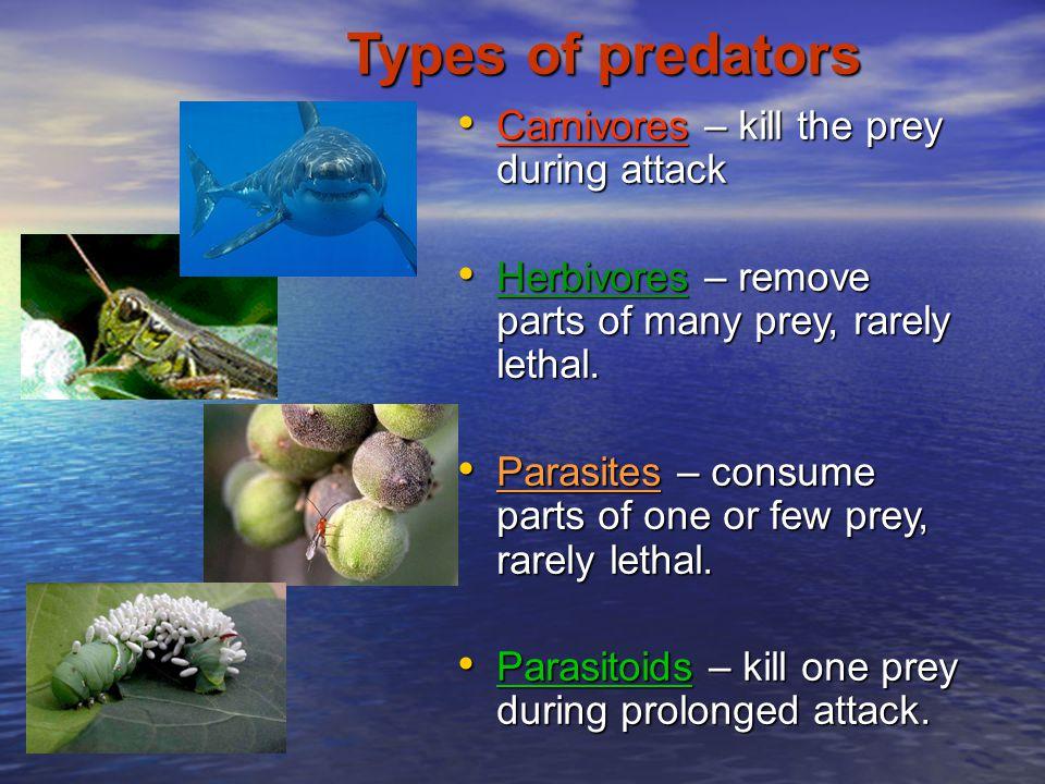 Types of predators Carnivores – kill the prey during attack
