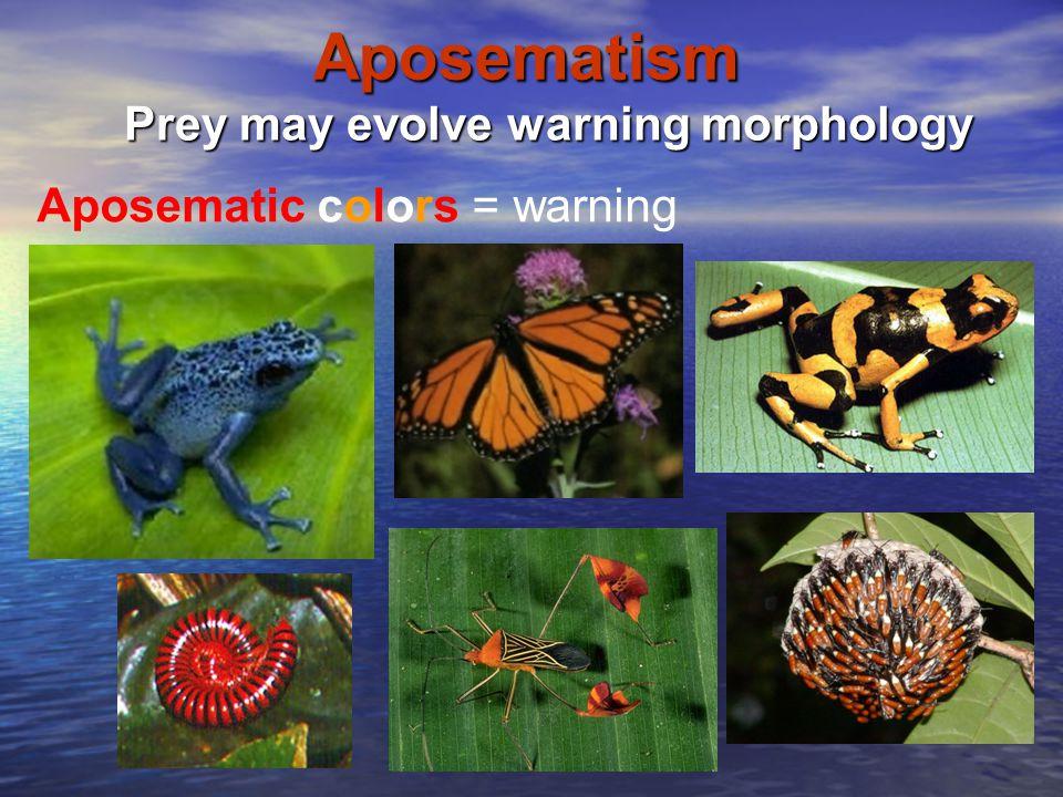 Prey may evolve warning morphology
