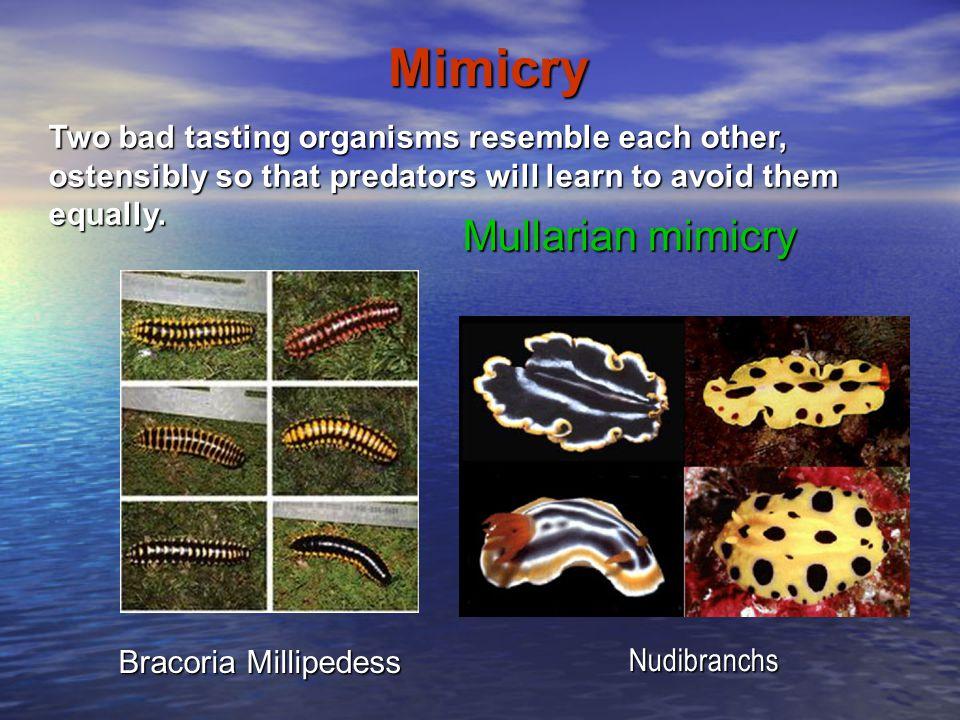 Mimicry Mullarian mimicry