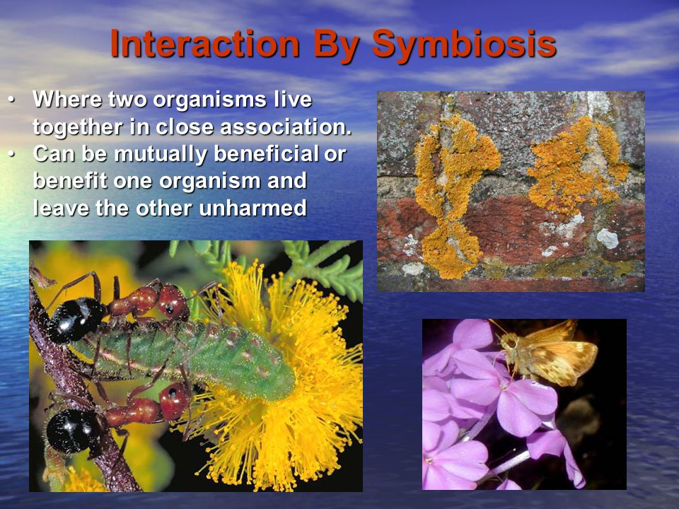 Interaction By Symbiosis