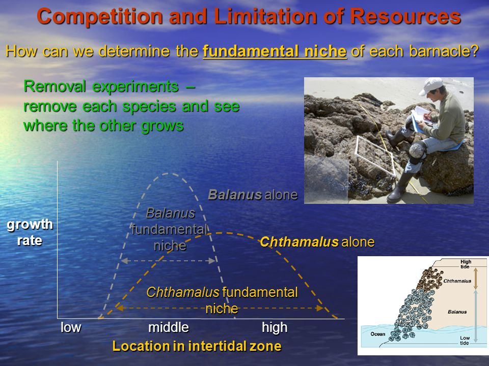 Competition and Limitation of Resources