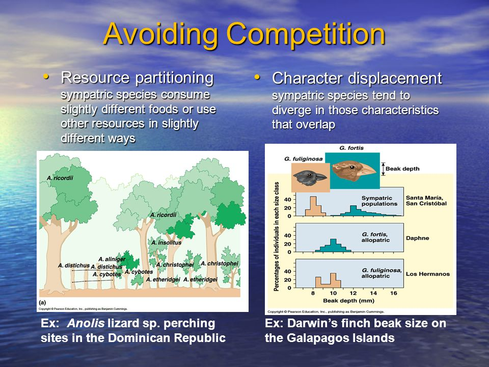 Avoiding Competition Resource partitioning sympatric species consume slightly different foods or use other resources in slightly different ways.
