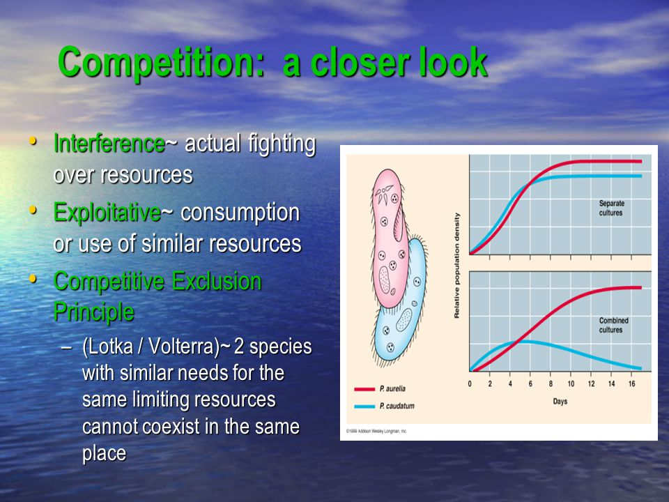 Competition: a closer look