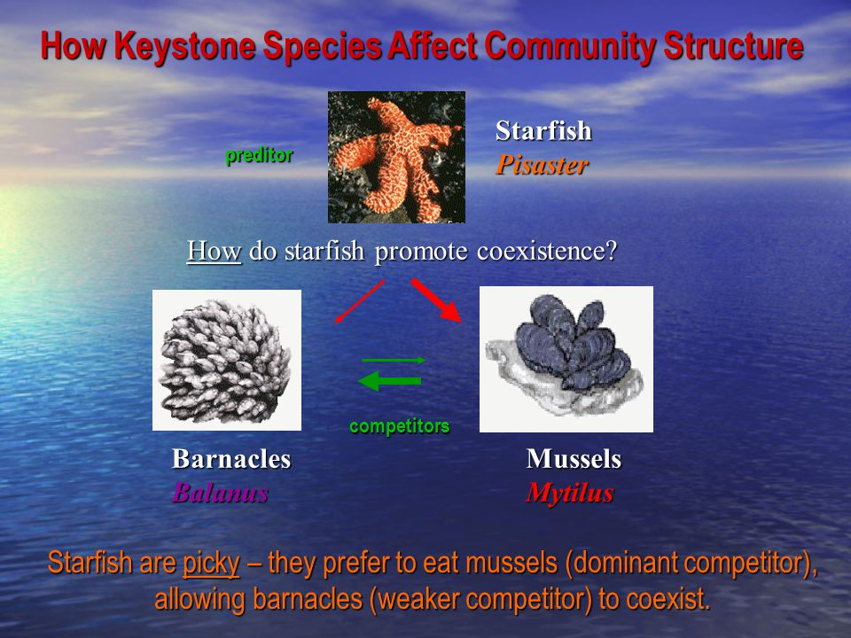 How Keystone Species Affect Community Structure