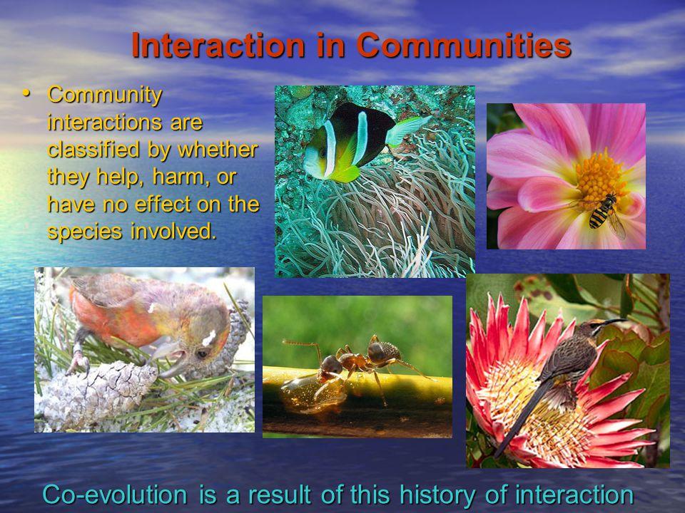 Interaction in Communities
