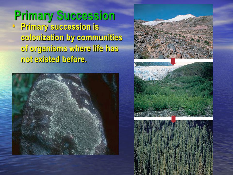 Primary Succession Primary succession is colonization by communities of organisms where life has not existed before.