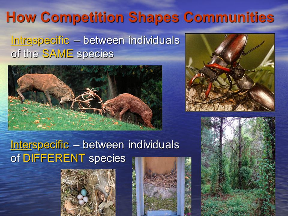 How Competition Shapes Communities