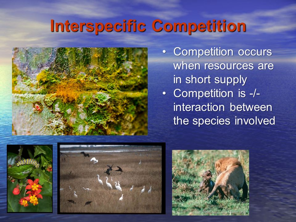 Interspecific Competition