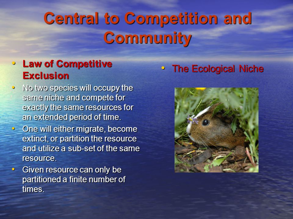 Central to Competition and Community