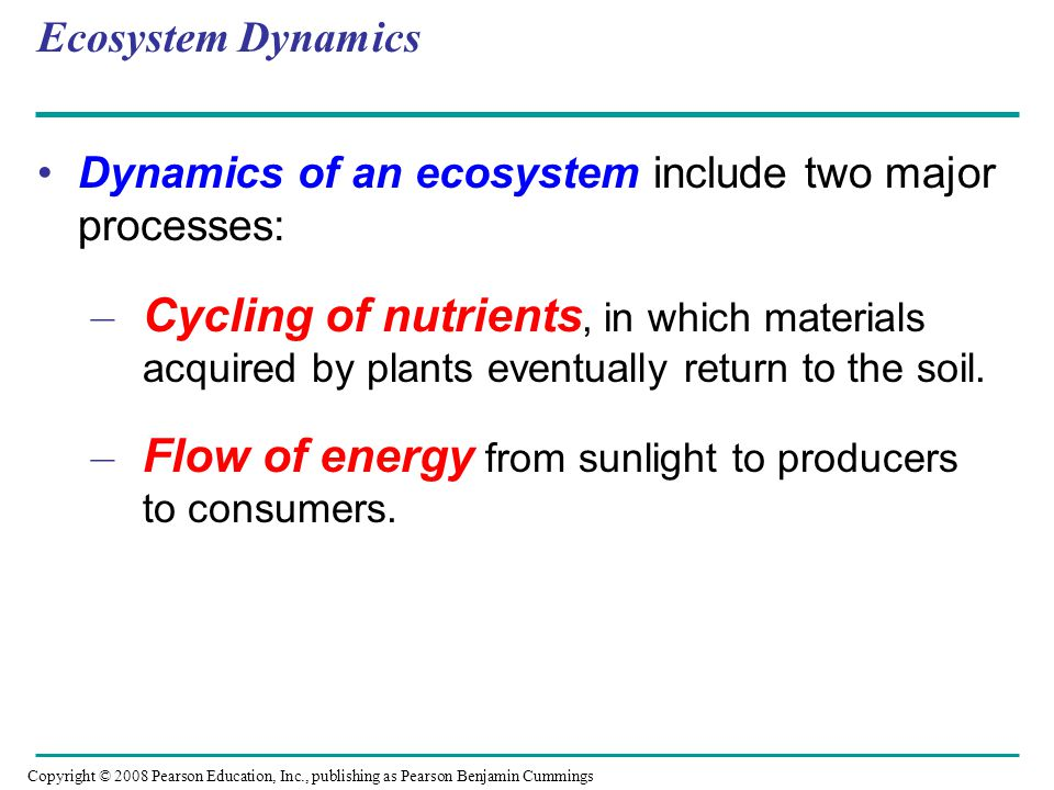 Flow of energy from sunlight to producers to consumers.