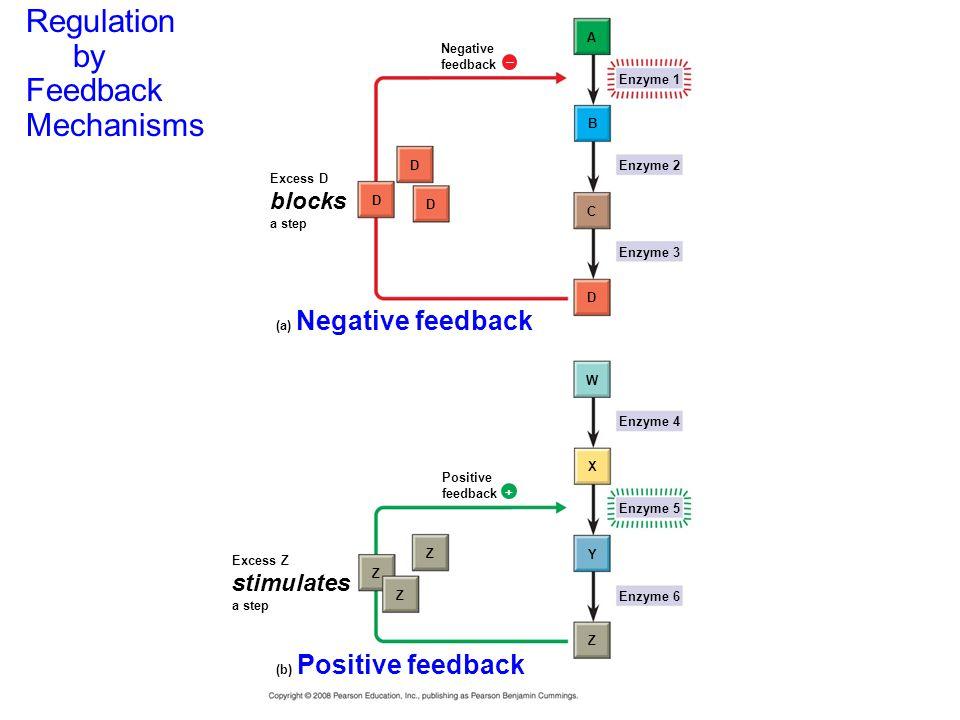Regulation by Feedback Mechanisms blocks stimulates Figure 1.13 A