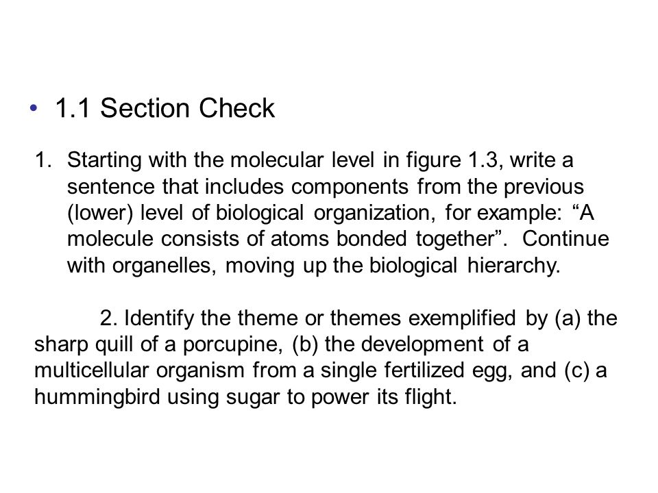 1.1 Section Check