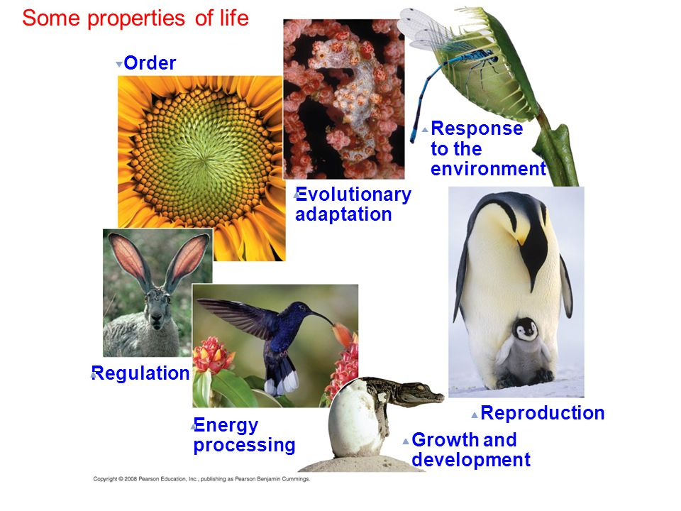 Some properties of life