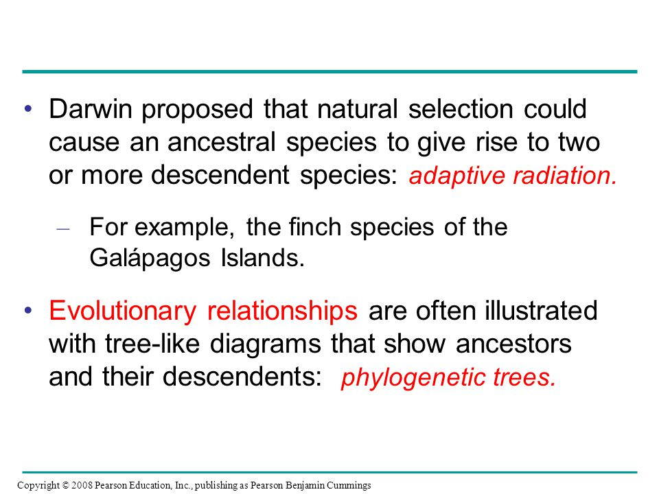 Darwin proposed that natural selection could cause an ancestral species to give rise to two or more descendent species: adaptive radiation.