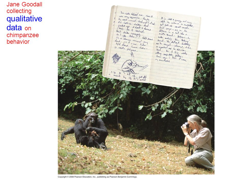 Jane Goodall collecting qualitative data on chimpanzee behavior