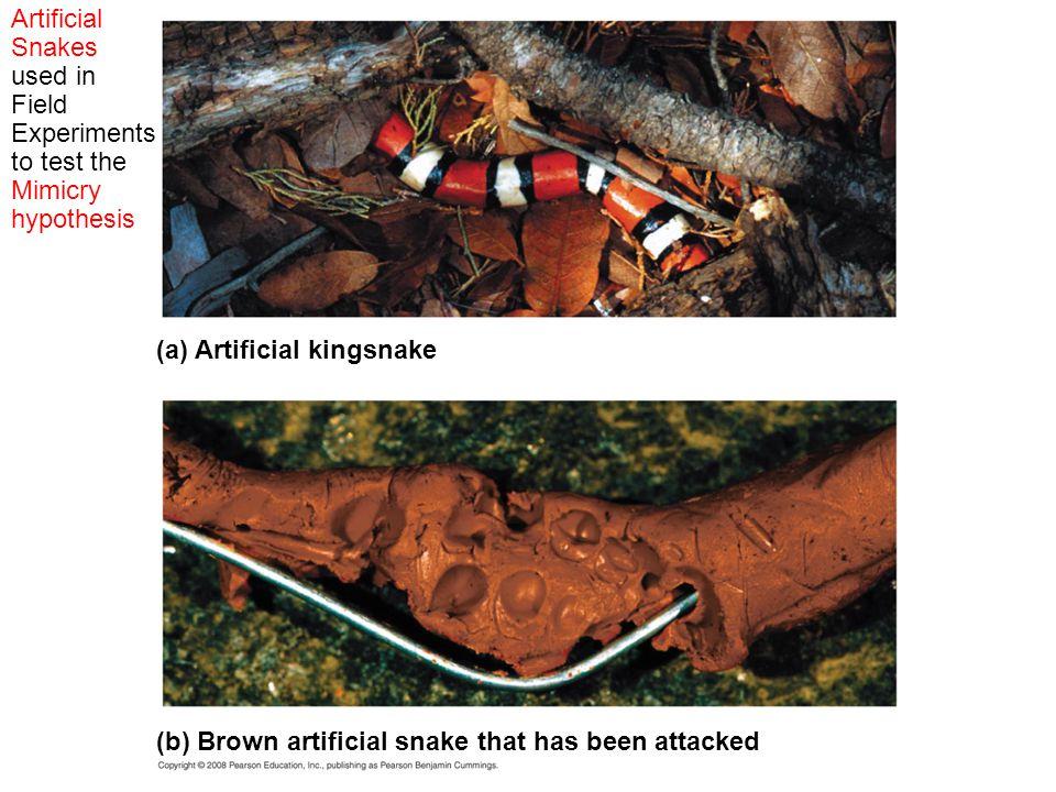(a) Artificial kingsnake