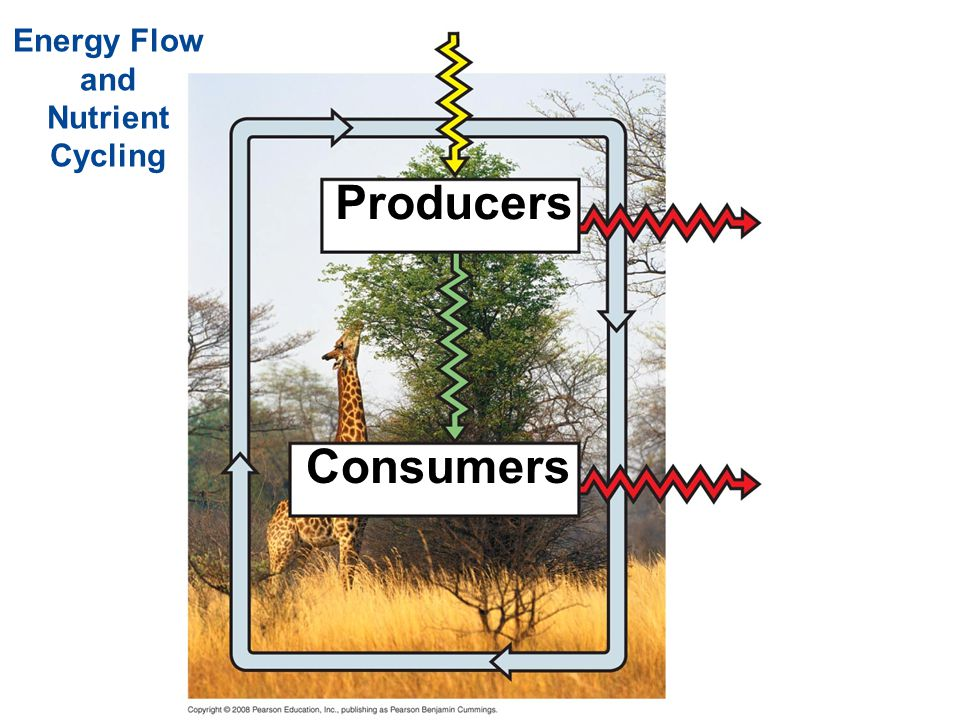 Energy Flow and Nutrient Cycling Producers Consumers