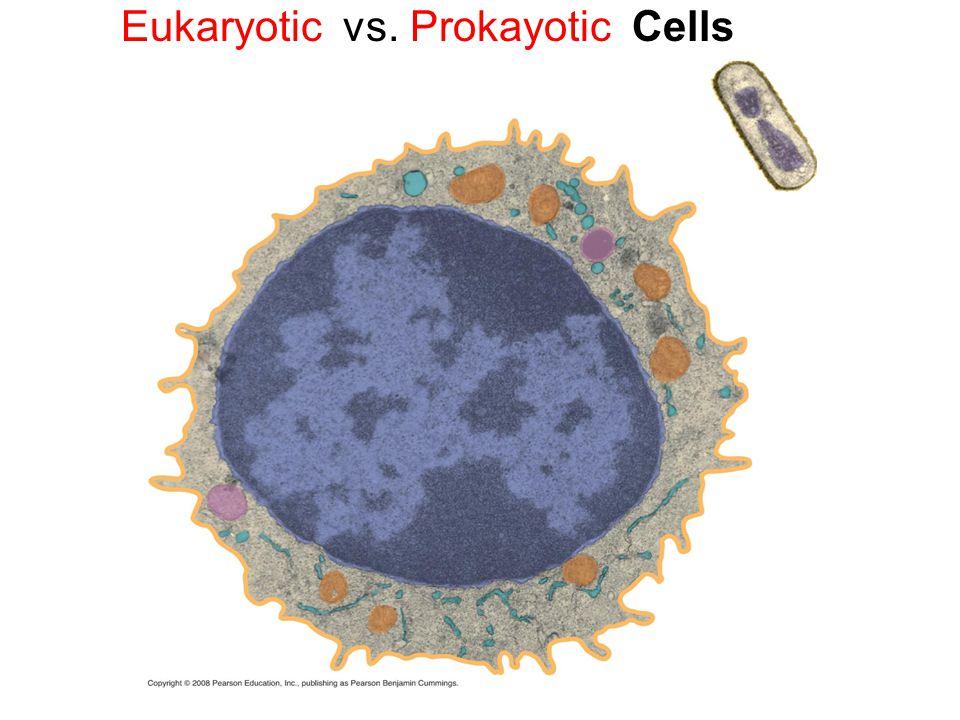 Eukaryotic vs. Prokayotic Cells