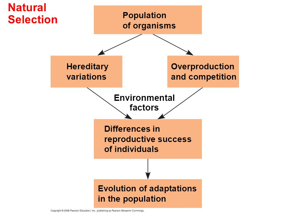 Natural Selection Environmental factors Population of organisms