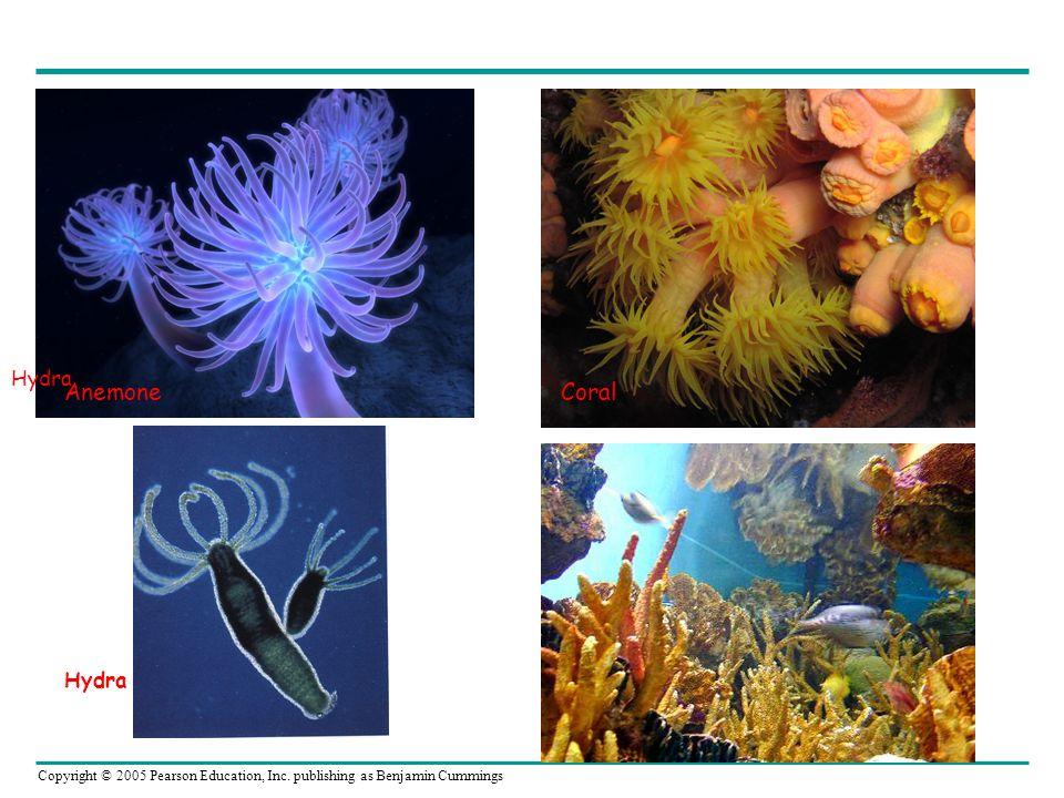Hydra Anemone Hydra Coral