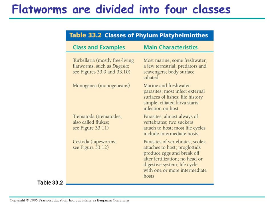 Flatworms are divided into four classes