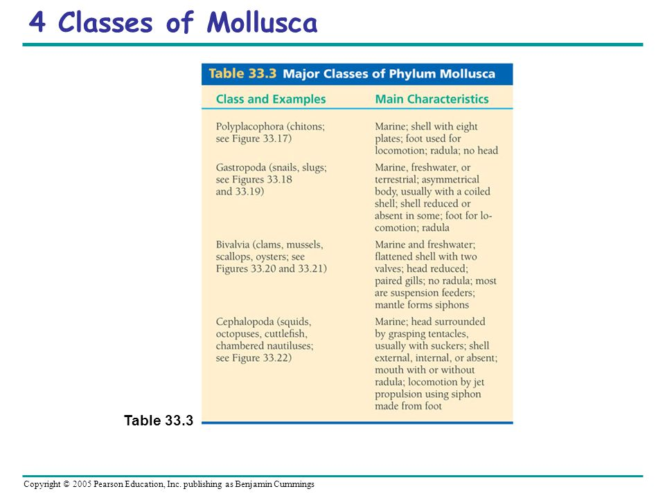 4 Classes of Mollusca Table 33.3