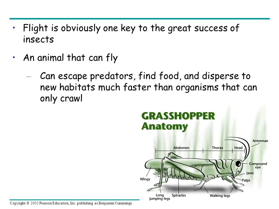 Flight is obviously one key to the great success of insects
