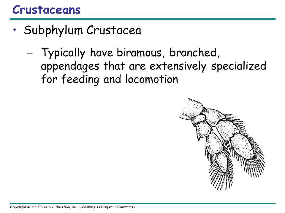 Crustaceans Subphylum Crustacea