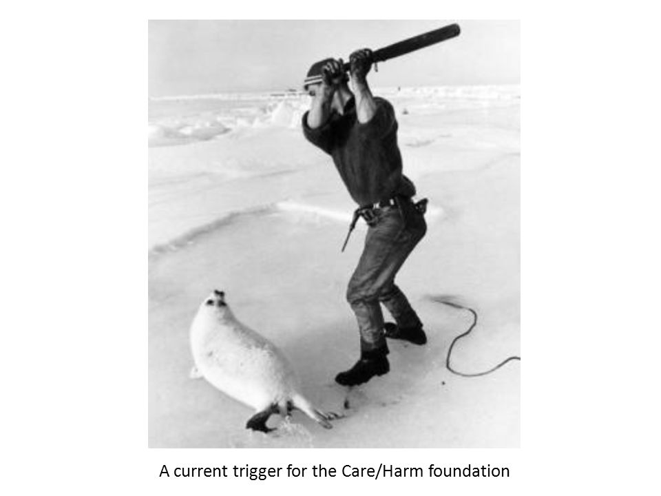 A current trigger for the Care/Harm foundation