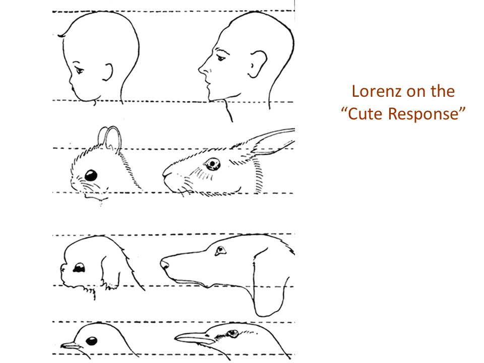 Lorenz on the Cute Response