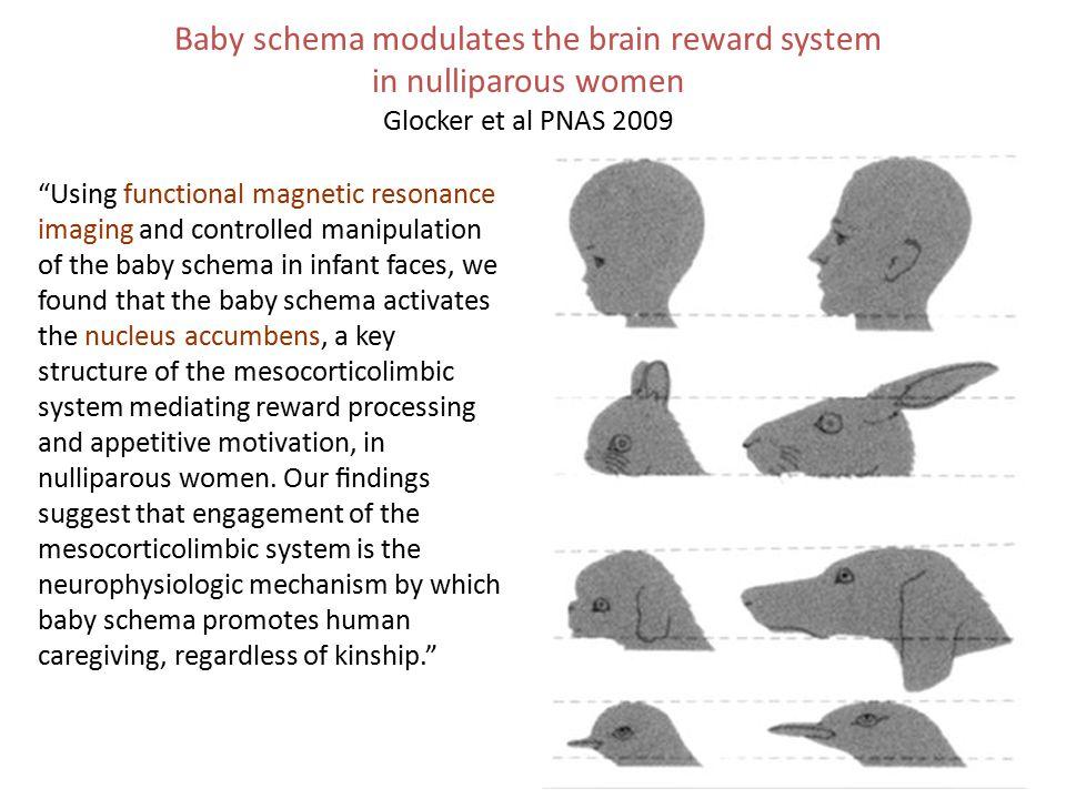 Baby schema modulates the brain reward system