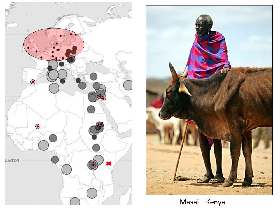 Masai – Kenya