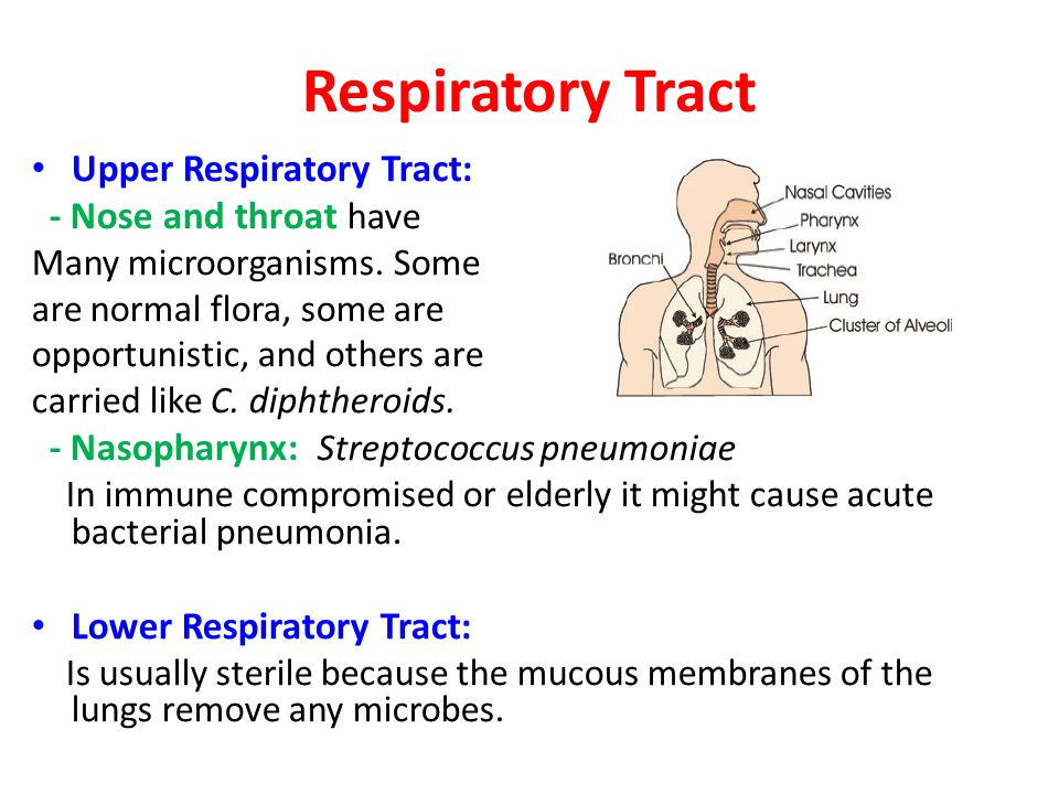 Respiratory Tract Upper Respiratory Tract: - Nose and throat have