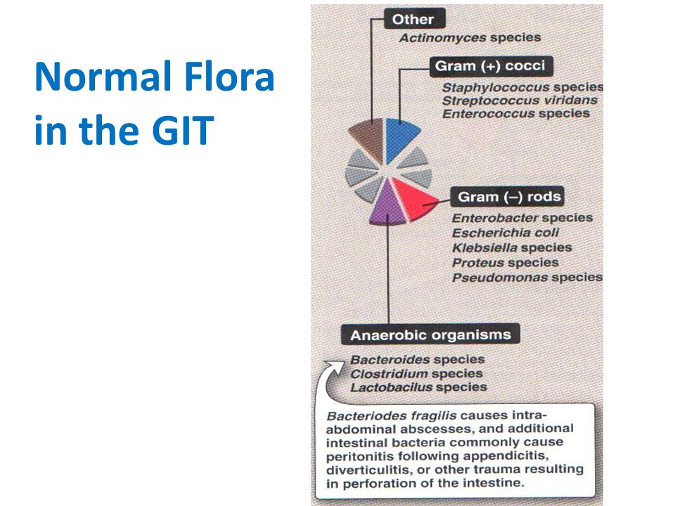 Normal Flora in the GIT