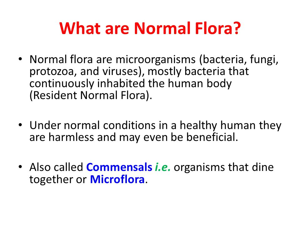 What are Normal Flora