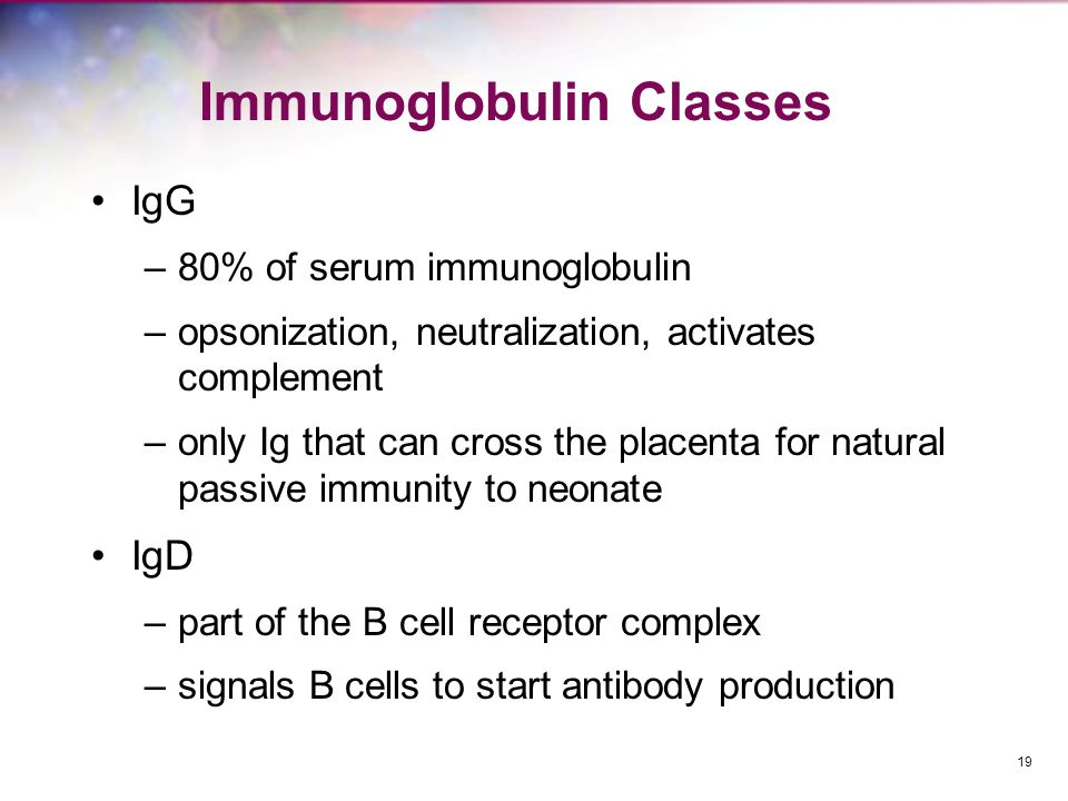 Immunoglobulin Classes