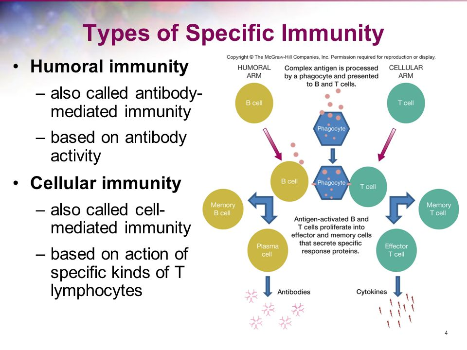 Types of Specific Immunity